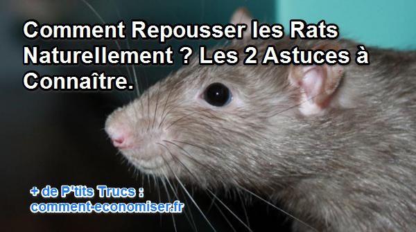 comment faire fuir les rats
