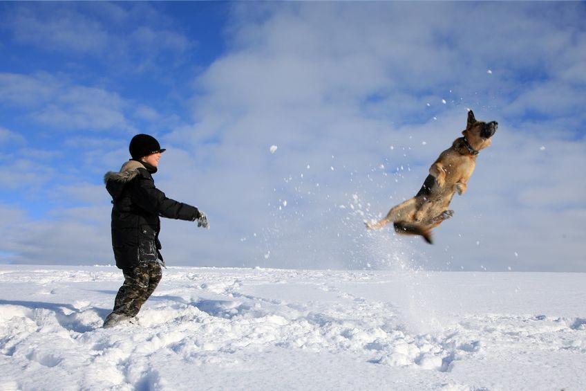 comment faire jouer son chien